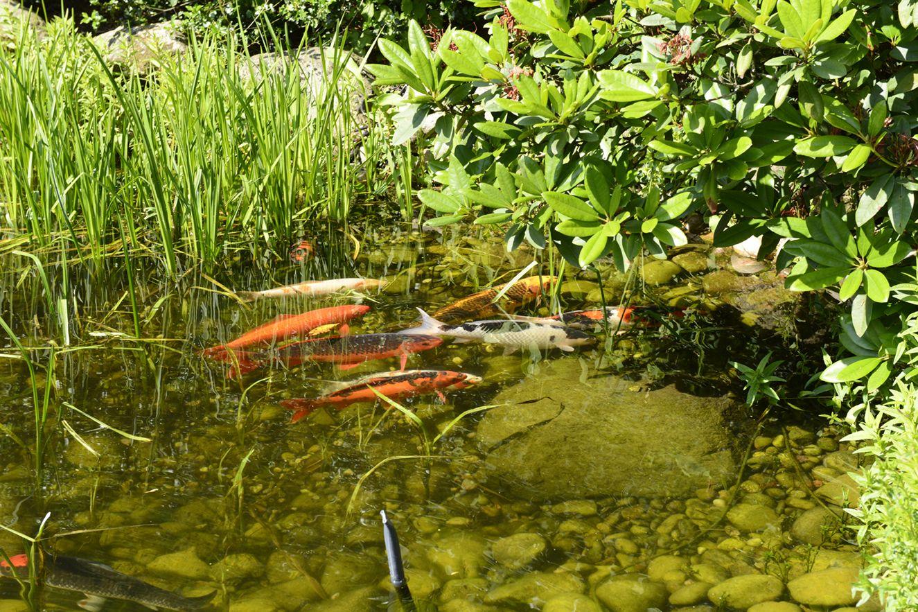 Bewässerungssysteme & Entwässerung für den Garten